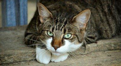 Zahnwechsel bei Katzen – Was Sie wissen sollten