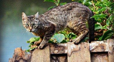 Wie schützen Sie Ihre Katze gegen Zecken ?