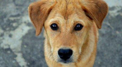 Zwingerhusten – so erkennen Sie ihn und können Ihrem Hund helfen