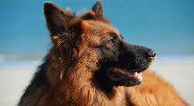 Abkühlung für Hunde im Sommer: 17 Tipps gegen die Hitze