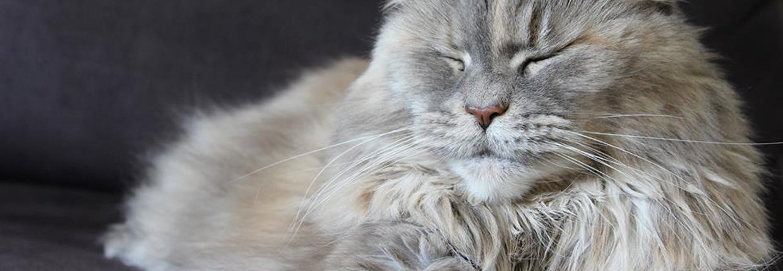 Allergie bei Katzen: Wie erkennen Sie diese und was können Sie dagegen tun?