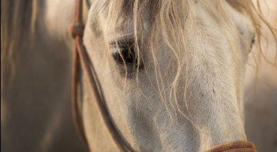 Alte Pferde füttern – So bleibt Ihr Pferd gesund und vital