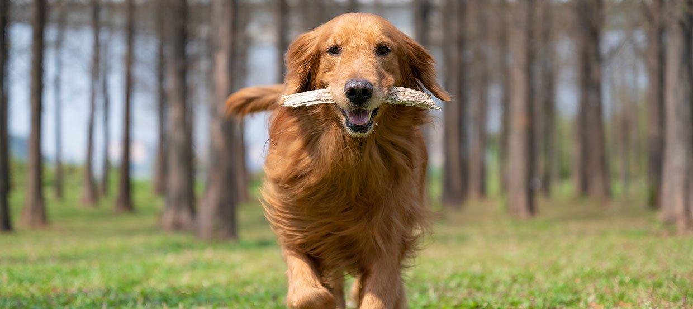 Beschäftigung für Hund und Herrchen – Hunden apportieren lernen
