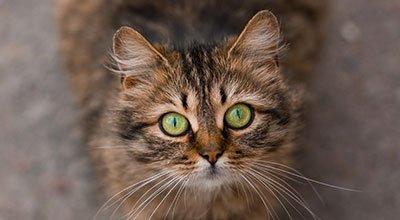 Augenkrankheiten bei der Katze – viele Ursachen sind möglich