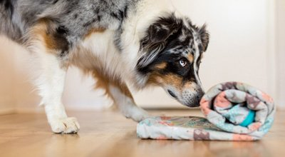 Tipps zum Thema Indoor Beschäftigung für Hunde
