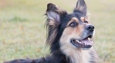 Obedience: So werden Sie und Ihr Hund ein starkes Team