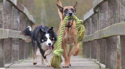 Hundespielzeug selber machen: 5 einfache Bastelanleitungen