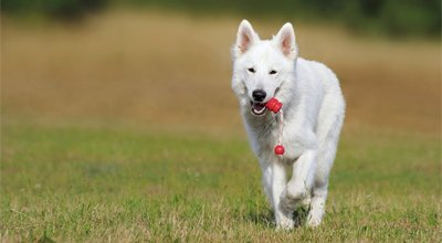 Niereninsuffizienz beim Hund: Was Sie als Hundebesitzer beachten sollten