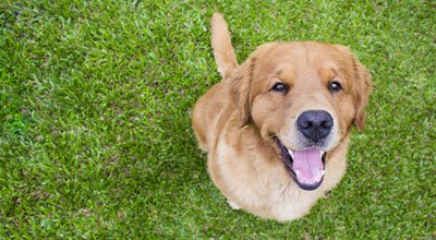 Clickertraining mit dem Hund - Aufbau, Tricks & Tipps