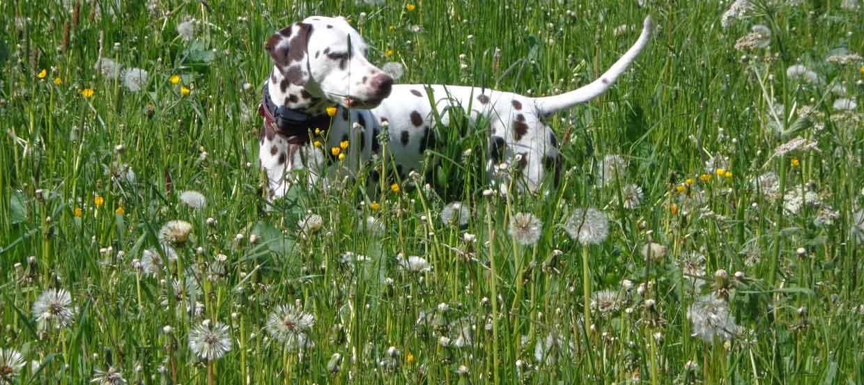 Hilfe, mein Hund hat Durchfall - was kann ich tun?