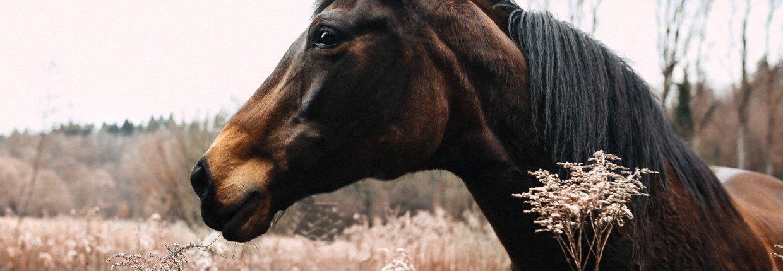 Pferdemüsli - Wie erkenne ich das Richtige?