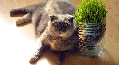 Was sollten Sie über Diätfutter für die Katze wissen?