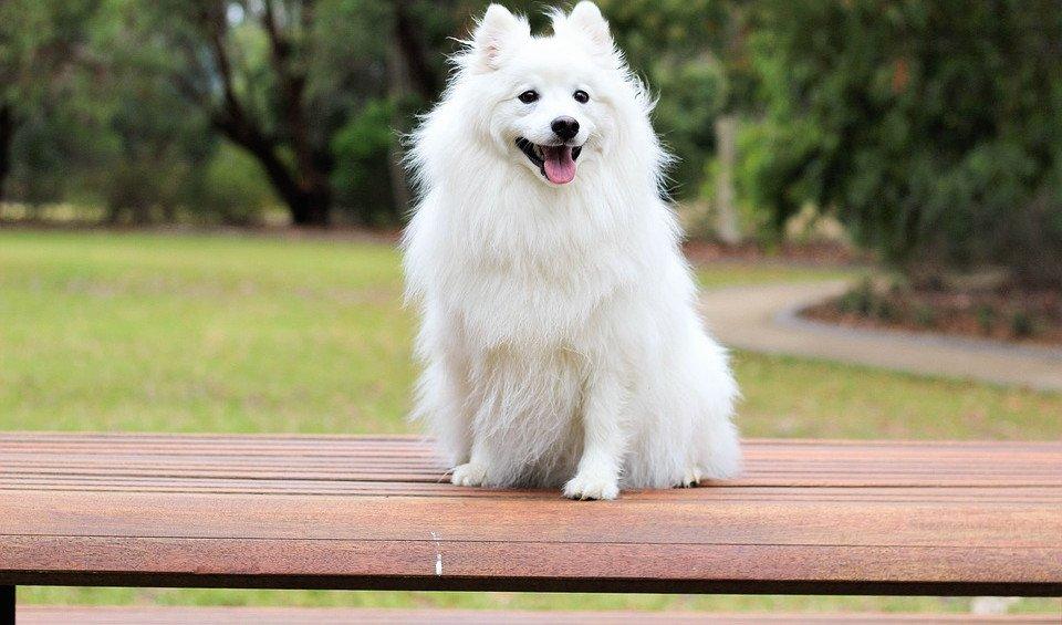 Blasenentzündung beim Hund: Anzeichen und Behandlung