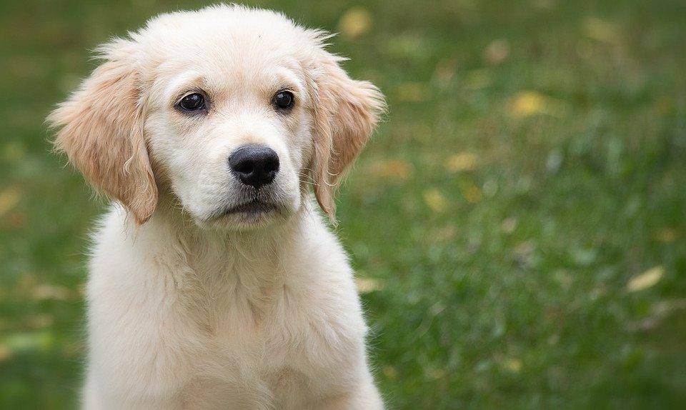 Wie erziehe ich meinen Hund?