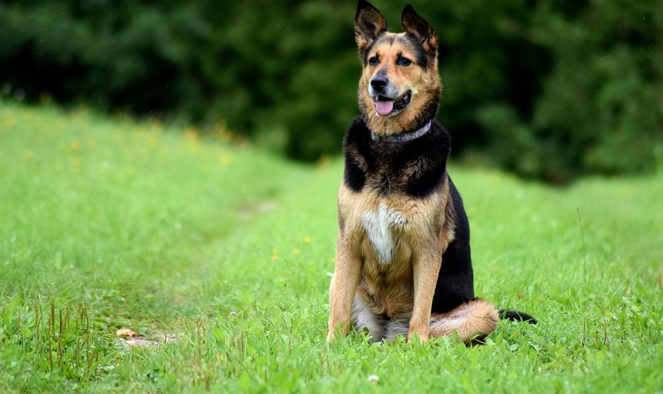 Bandscheibenvorfall beim Hund: Symptome, Ursachen & OP Kosten