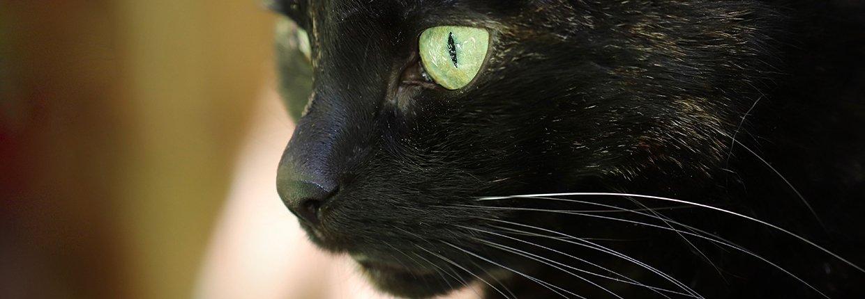 Ihre Katze niest oft: Ist das harmlos oder eine Erkrankung?
