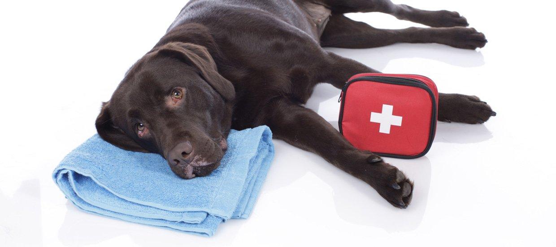 Erste Hilfe beim Hund | Notlagen erkennen & richtig handeln