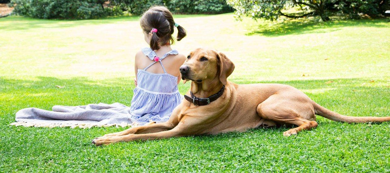 Der Familienhund: Schwangerschaft, Baby & Kind mit Hund