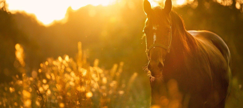 Eine haarige Angelegenheit: So unterstützen Sie Ihr Pferd im Fellwechsel