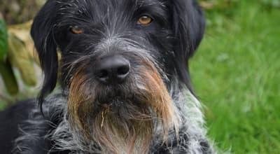 Futter für Jagdhunde: Energiereiches Hundefutter für leistungsstarke Hunde