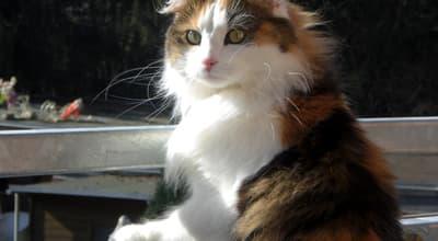 Getreidefreies Katzenfutter - Trend oder wichtig für die Gesundheit?