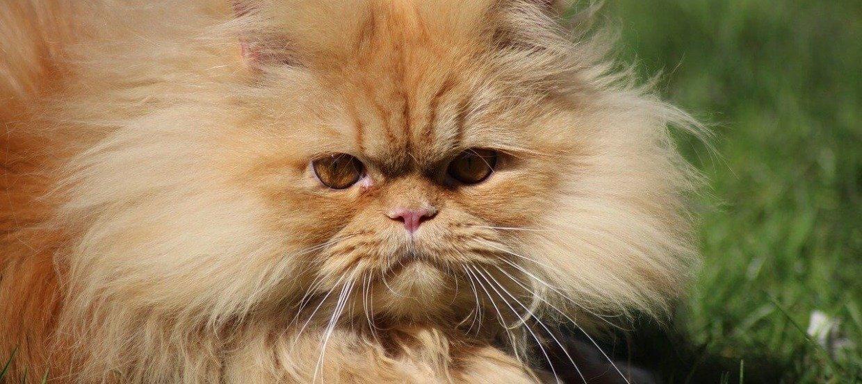Haarballen bei Katzen: Das können Sie tun, wenn Ihre Katze Haarballen erbricht