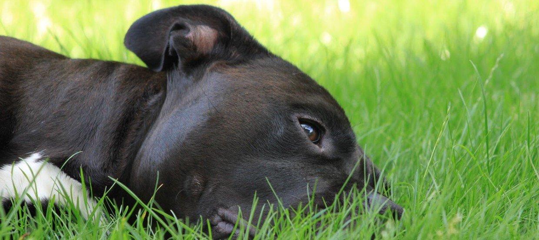 Was tun, wenn der Hund erbricht?