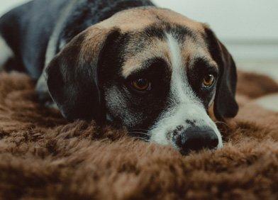 Hunden herpes bei Genomia: Prüfung
