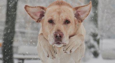 Hund im Winter: Zehn Tipps für die kalte Jahreszeit