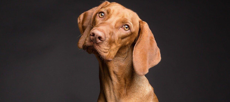 Hund kaufen: eine folgenträchtige Entscheidung