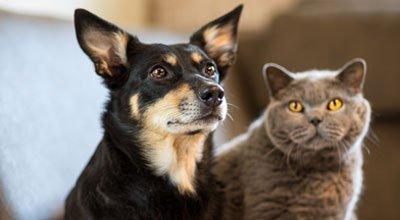Zehn einfache Tipps, um Hund und Katze friedlich aneinander zu gewöhnen!