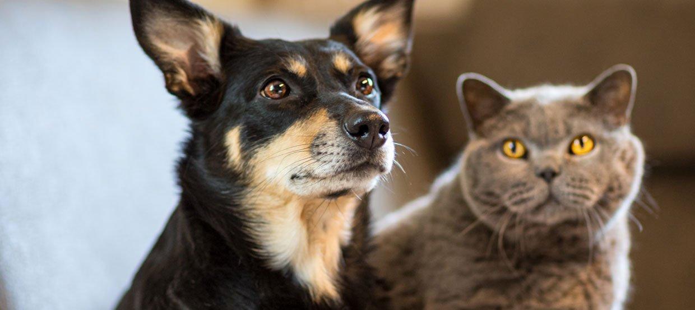 kennenlernen hund und katze)