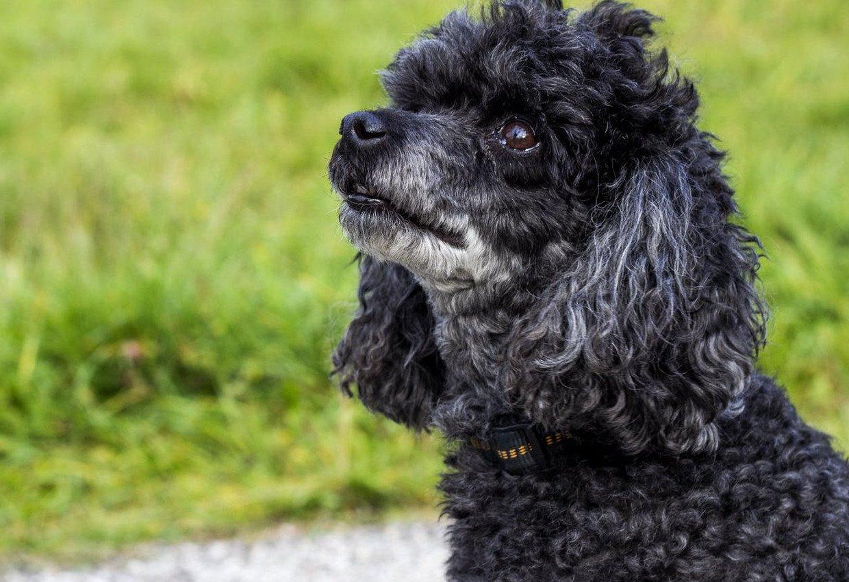 Nass- oder Trockenfutter – was ist das Beste für meinen Hund?