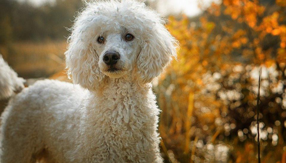 Ihr Hund frisst nicht: Mögliche Gründe und Tipps