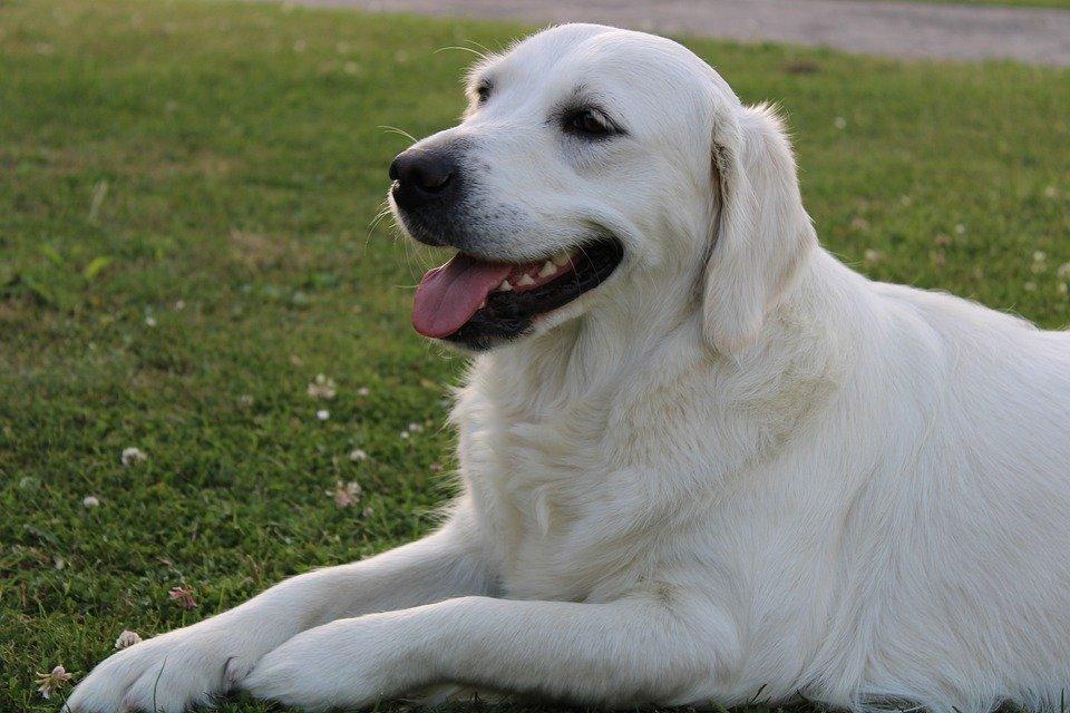 Hundefutter MHD - alles über die Mindesthaltbarkeit