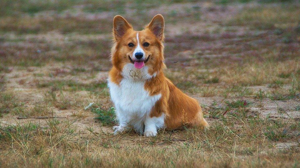 Ohrenentzündung beim Hund : 5 hilfreiche Tipps für Ihren Vierbeiner