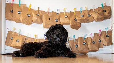 Adventskalender für Hunde selber basteln - DIY-Ideen für Weihnachten 2021