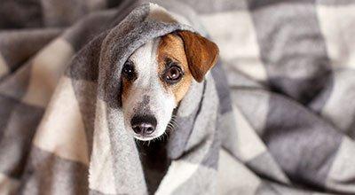 Tipps für das Training: Hund alleine zu Hause lassen