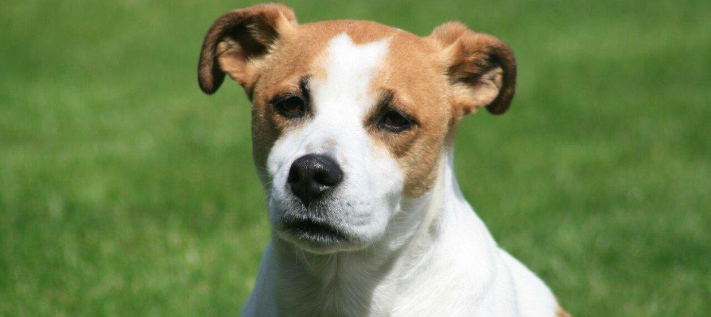 Hundefutter Allergie beim Hund – Symptome erkennen und richtig handeln