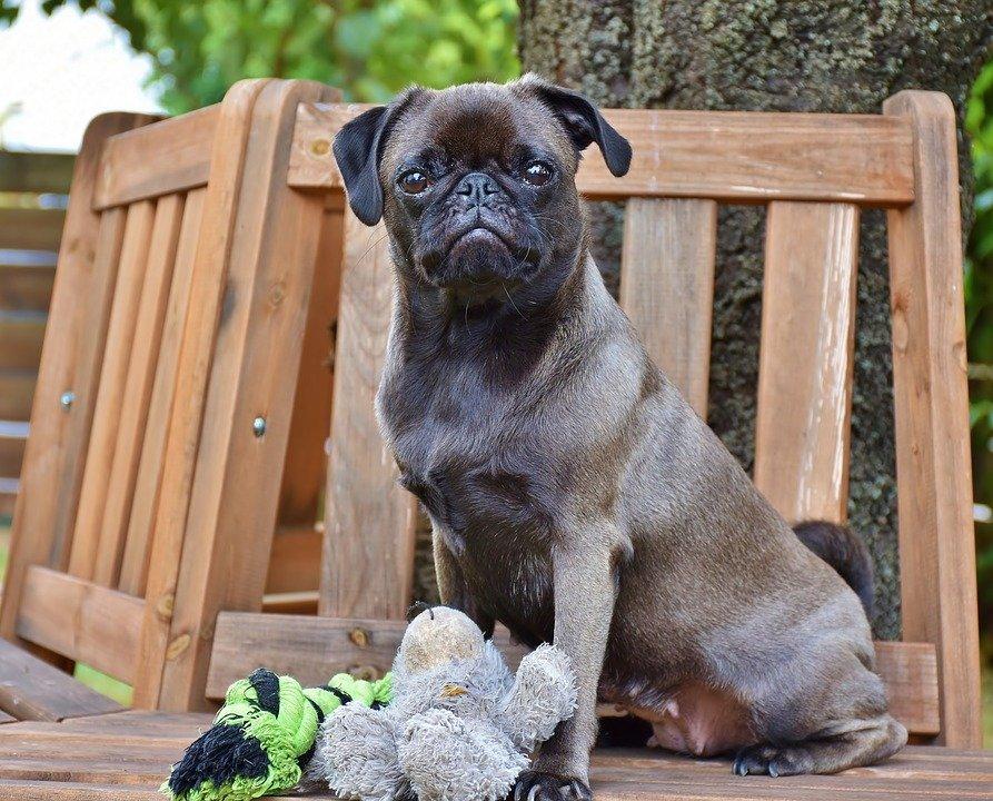 Besuch in der Hundeschule: Was sollten Sie dazu wissen?