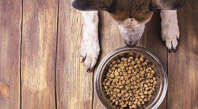 Hundeernährung: kaltgepresstes Hundefutter versus extrudiertes Hundefutter