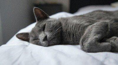 Fieber bei Katzen: So erkennen Sie Symptome und reagieren richtig