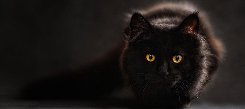 Katzenflöhe bekämpfen: Die 10 besten Tipps gegen Flöhe bei Katzen