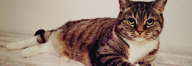 Was sollten Sie tun, wenn Ihre Katze Durchfall hat?