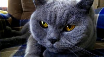 Ihr Katze niest häufig? Wann Sie einen Tierarzt aufsuchen sollten