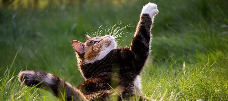 Katze viel Gewichtsverlust wackeln