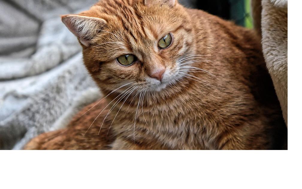 Meine Katze erbricht - was soll ich tun?
