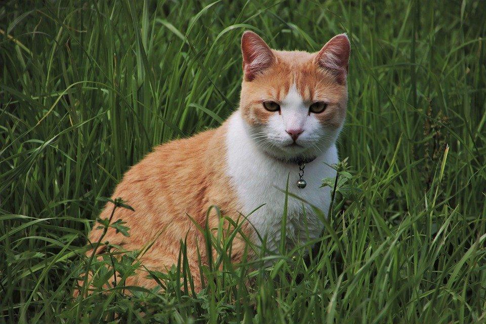 Katze Pinkelt Immer An Die Gleiche Stelle