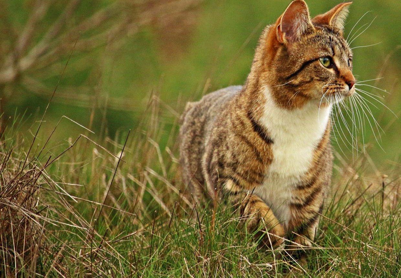 Welches Futter ist das Richtige bei einer Niereninsuffizienz Ihrer Katze?