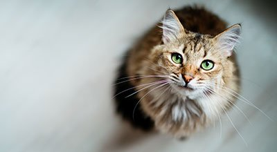 Eine Katze zieht ein – welche Erstausstattung brauchen Sie?